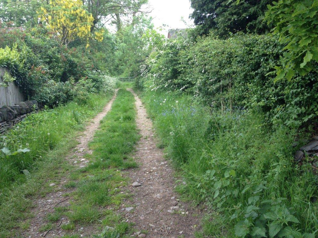 q this path