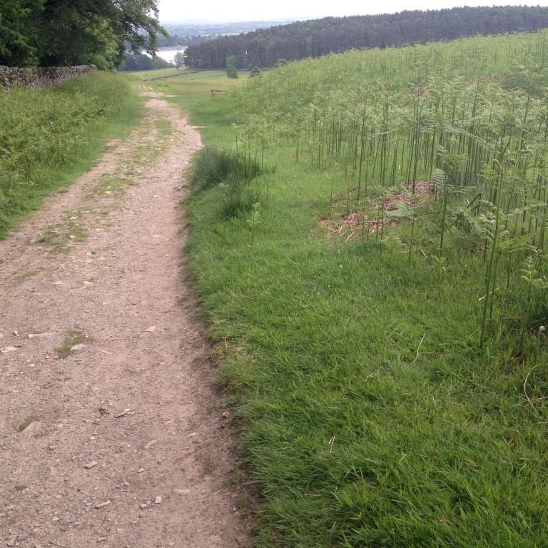 bradgate 4.5 mile (24) (Medium)